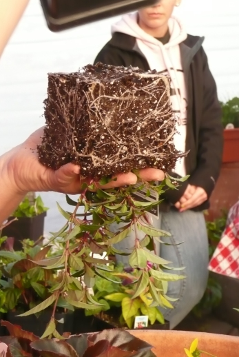 container planting (14)