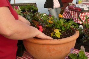 container planting (19)