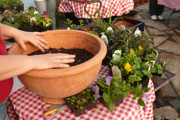 container planting (3)