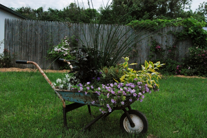 Purple Wheelbarrow (4)